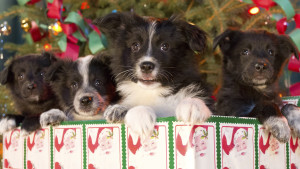 12-Dogs-Of-Christmas-Great-Puppy-Rescue_2012_EN_US_1920x1080_STORYART_NFLX