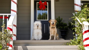 Netflix-A-Christmas-Wedding-Tail_LATAM_StoryArt