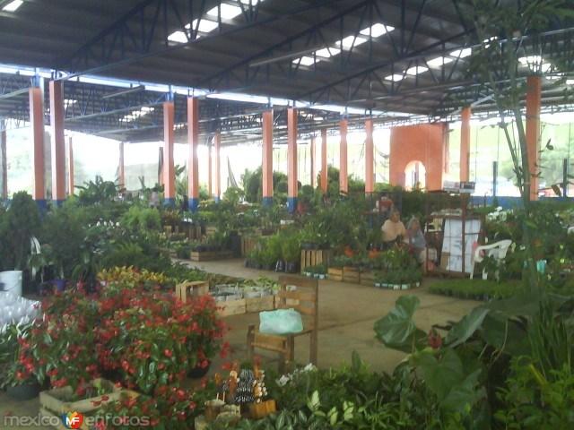 Tenango/Mercado